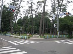 相模台公園の松林
